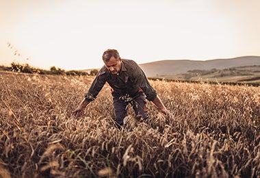 Cultivo de quinoa